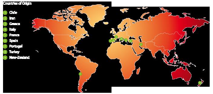 worldmap-kiwis