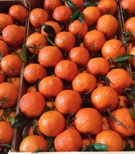 Easy peelers-Tangerines-Mandarinen-Mandarines-Mandariner-Mandariinit-Mandarinai- мандарины