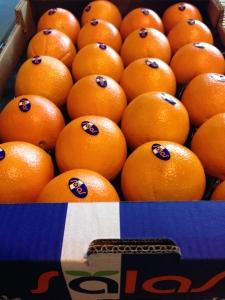 Navelinas-Oranges-Sinaasappels-Apelsiner-Appelsiner-Appelsiini-Apelsini-Apelsinai-апельсины 2